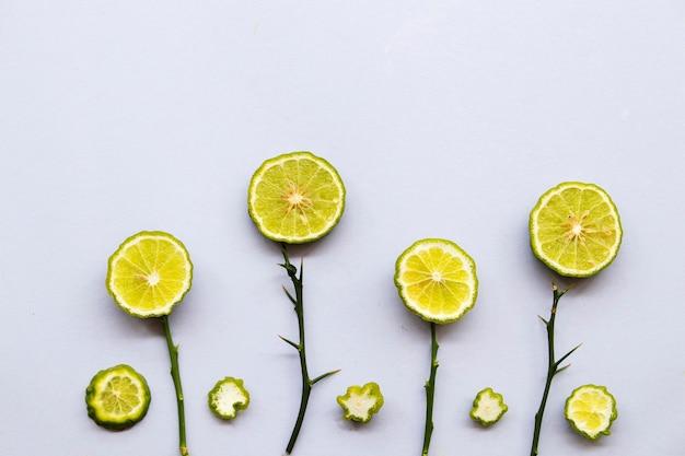 Kaffir lime arrangement de végétation à base de plantes style plat