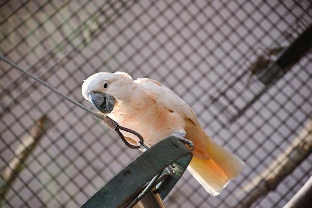 Kakadu dans le zoo sur une branche