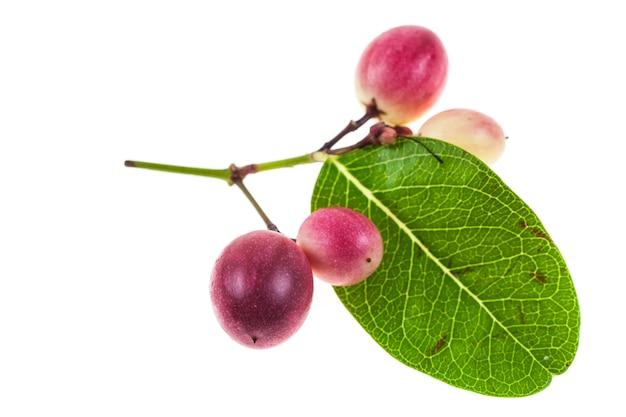 Karanda ou carunda fruit isolé sur blanc