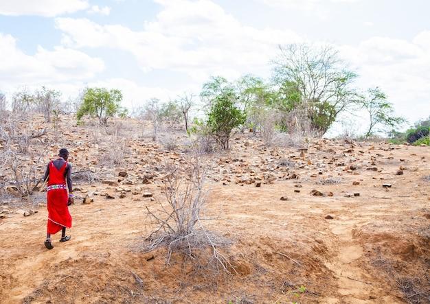 Kenya, afrique. homme du groupe ethnique masai marchant seul dans la savane