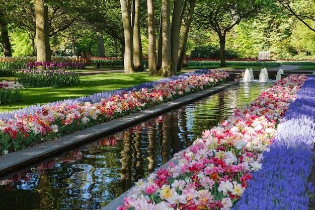 Keukenhof - le plus grand jardin de fleurs d'europe - hollande