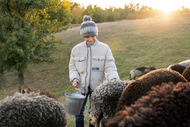 Kid coup moyen avec des moutons