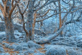 Killarney forêt colorée hdr