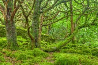 Killarney forêt hdr extérieur