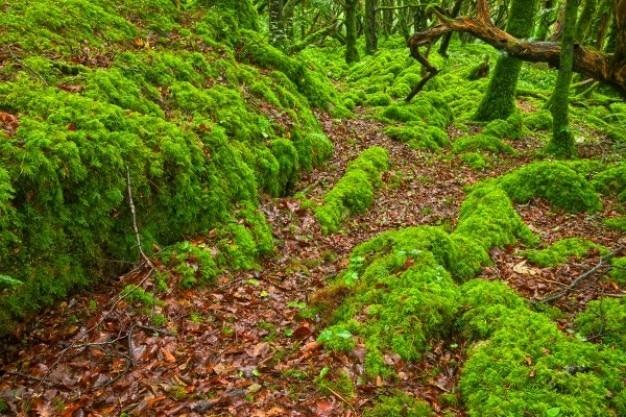 Killarney forêt hdr