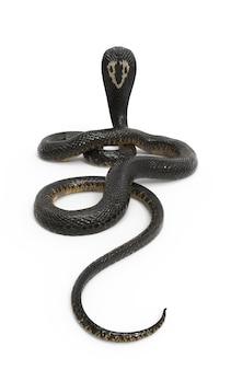 King cobra le serpent venimeux le plus long du monde isolé sur fond blanc avec détourage p