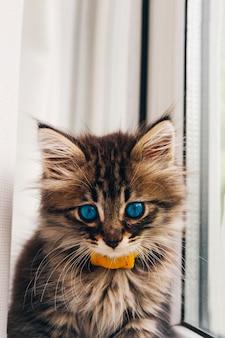 Kitty aux yeux bleus