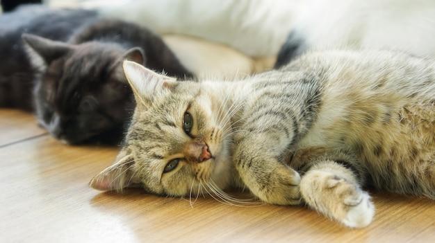 Kitty rayé gris couché dans la chambre.
