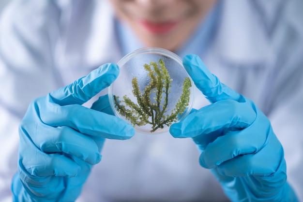 Laboratoire de biocarburants avec des algues, expériences de recherche, démonstrations pédagogiques dans des laboratoires médicaux