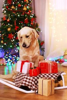 Labrador assis près d'un traîneau avec des boîtes à cadeaux sur un plancher en bois et une surface d'arbre de noël