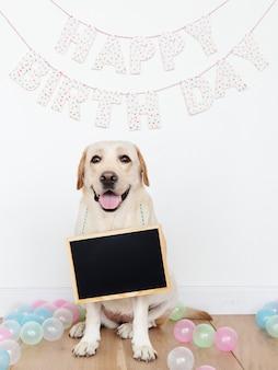 Labrador retriever lors d'une fête d'anniversaire avec un tableau vide accroché au cou
