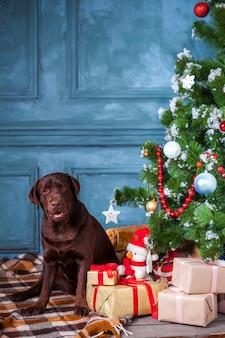 Le labrador retriever noir assis avec des cadeaux sur les décorations de noël