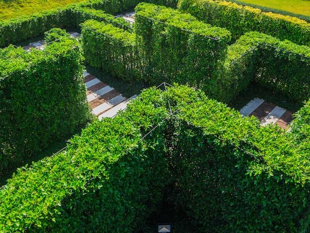 Labyrinthe de jardin vert