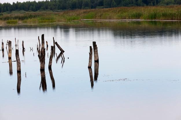 Un lac avec différentes plantes