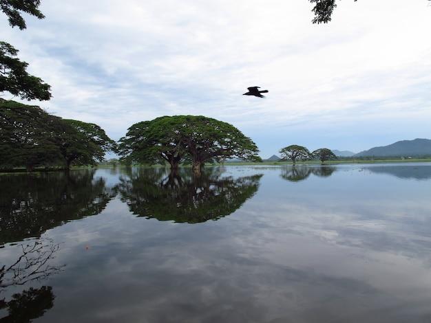 Le lac fermer le parc national de yala au sri lanka