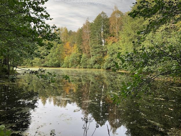 Lac de forêt avec des arbres reflétés sur le paysage d'automne de surface de l'eau