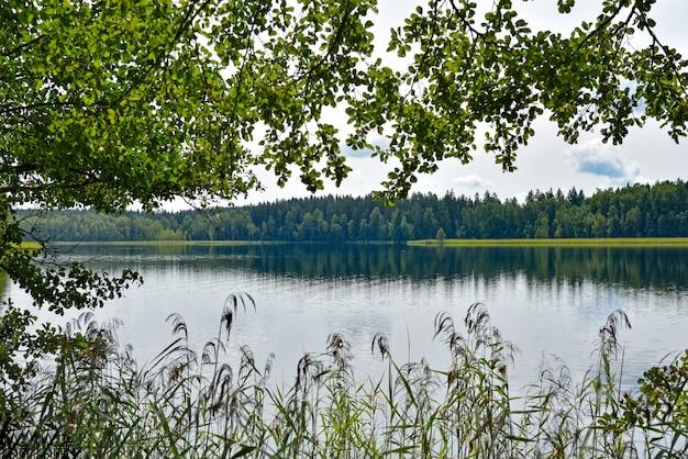 Lac de la forêt dans un parc naturel en été