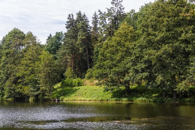 Un lac de forêt entouré d'arbres