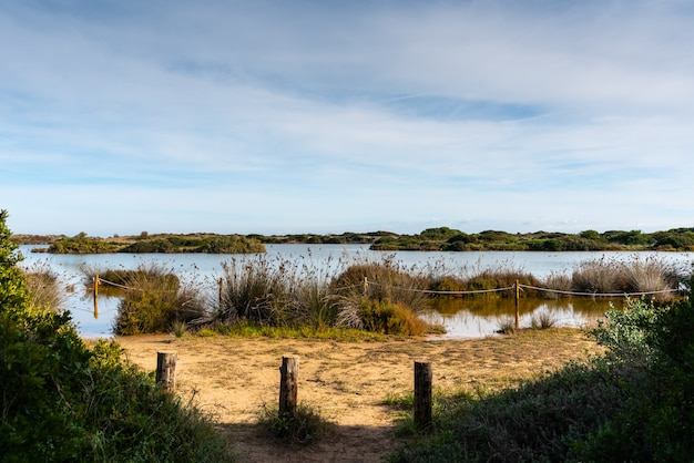 Lac de gavines, près d'une plage de valence, espagne