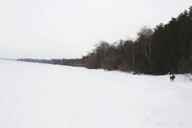 Lac gelé au canada.
