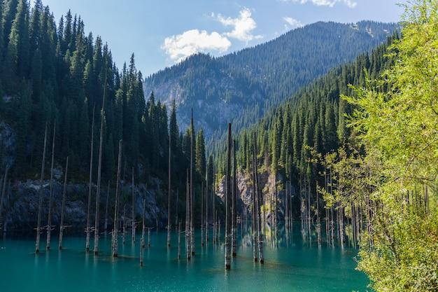 Lac kaindy - lac de montagne au kazakhstan