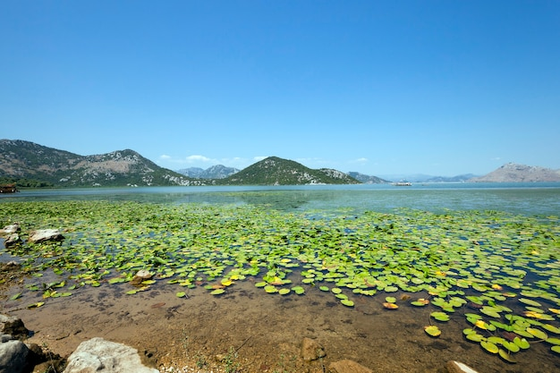 Le lac (monténégro) - lac skadar situé au monténégro en été de l'année