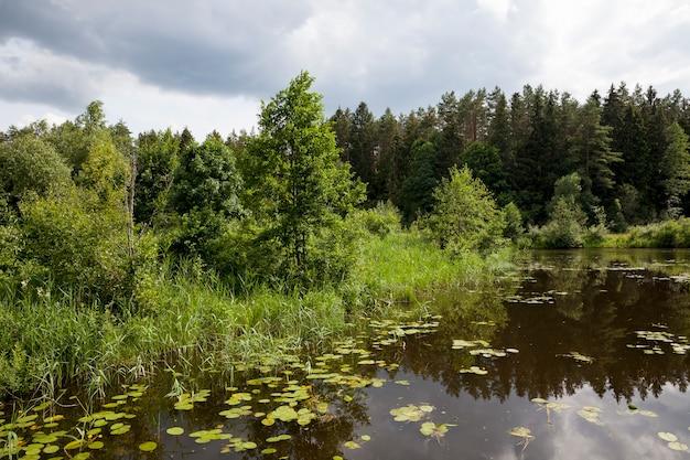Lac avec des nénuphars en croissance