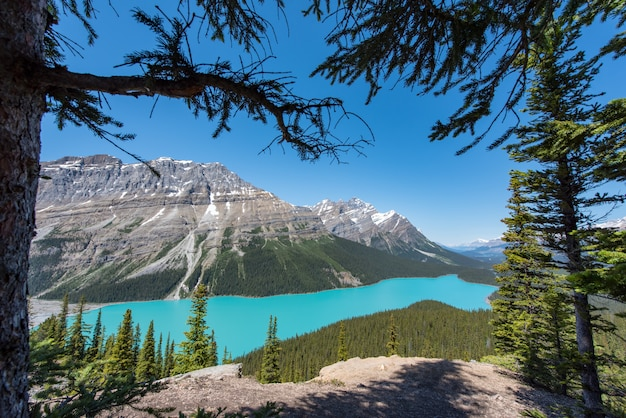 Lac payto en été, journée ensoleillée du haut du sentier de randonnée en alberta, canada