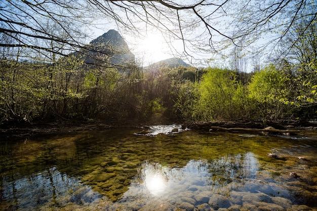 Lac peu profond dans la forêt il y a des buissons et des arbres tout autour d'une rivière qui se jette dans un lac