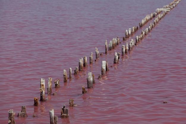 Lac rose. les supports d'un vieux pont ou d'un barrage en bois dépassent de la surface de l'eau.