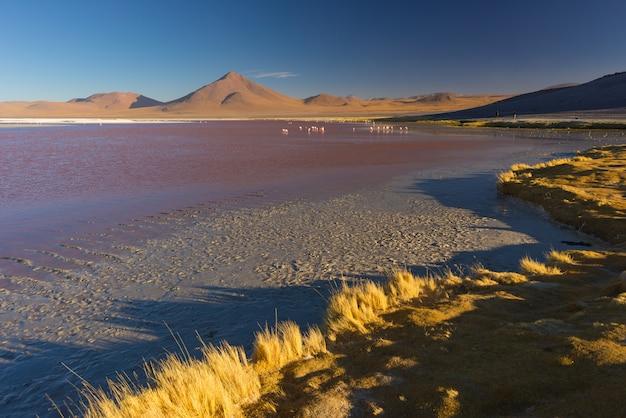 Lac salé avec des flamants roses