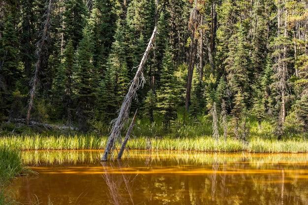 Un lac avec une teneur élevée en fer dans l'eau. pots de peinture dans le parc national kootenay, canada