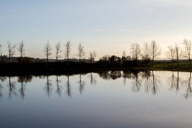 Lac tranquille avec des arbres nus sans feuilles