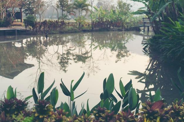 Lac tropical, scène de la nature
