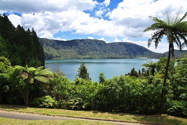 Lacs dans la forêt, rotorua, nouvelle-zélande