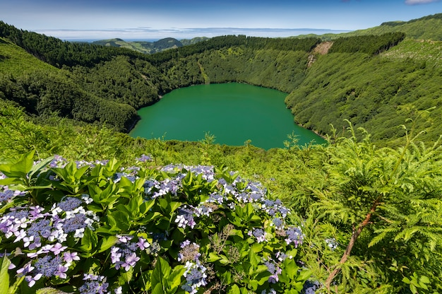 Lagoa de santiago avec de l'eau verte et des fleurs d'hortensia à sao miguel, îles des açores, portugal