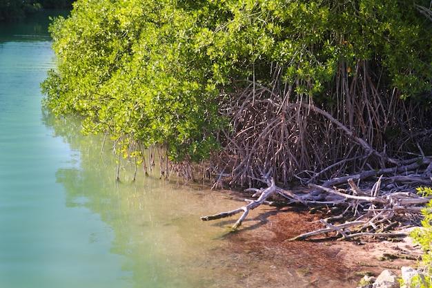 Lagune de la mangrove au rivage maya