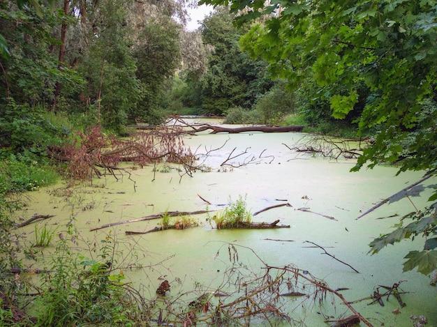 Lagune marécageuse verte mystérieuse forêt sombre avec marais