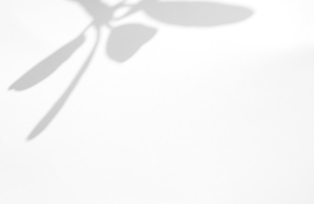 Laisse la superposition d'ombre naturelle sur fond de texture blanche, pour la superposition sur la présentation du produit, la toile de fond et la maquette, le concept saisonnier d'été