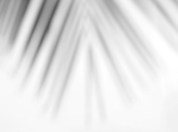 Laisse superposition d'ombre naturelle sur fond de texture blanche, pour superposition sur la présentation du produit, toile de fond et maquette, concept saisonnier d'été