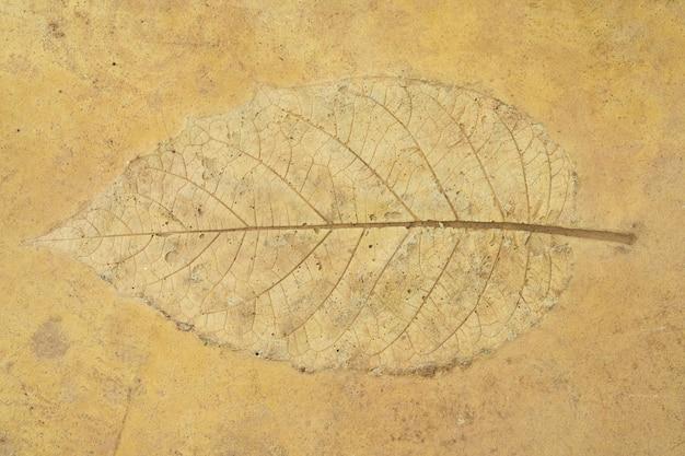 Laisser le stuc sur le sol de grès