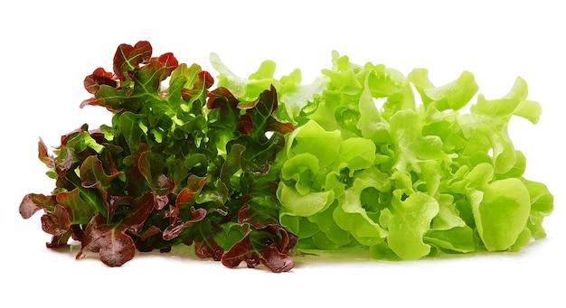 Laitue de chêne rouge et vert avec des gouttes d'eau sur fond blanc.