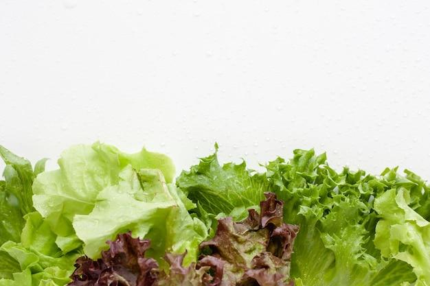 Laitue - ingrédient de salades avec des gouttes d'eau sur fond blanc
