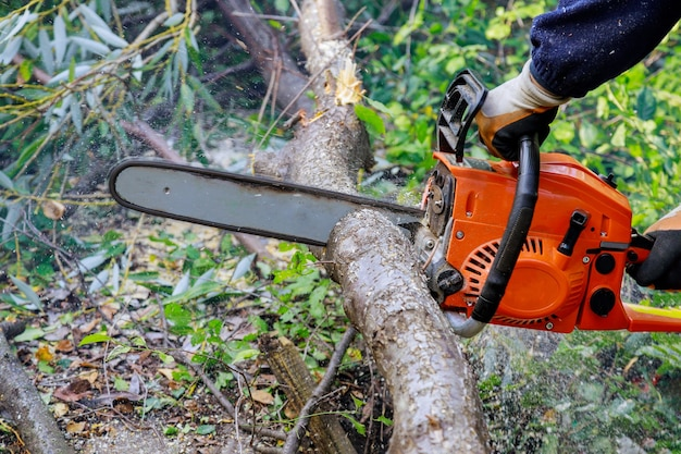 Lame de tronçonneuse coupe arbre tombant après une dure tempête d'ouragan