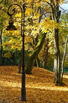 Lampe dans le parc de la ville d'automne avec des feuilles jaunes sous les arbres.