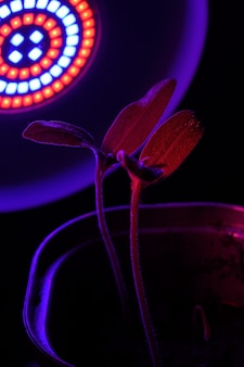 Lampe led pour la culture de plantes pour l'agriculture, phytolamps. plantes d'intérieur sous la lampe fito.