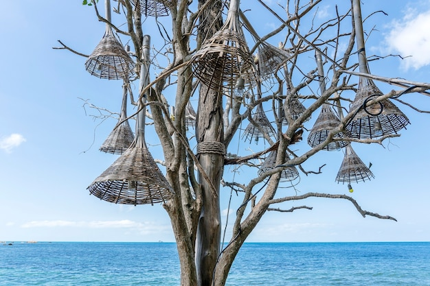 Des lampes décoratives en bois sont accrochées à un vieil arbre sur une plage tropicale près de l'eau de mer sur l'île paradisiaque de koh phangan, en thaïlande. concept de voyage, gros plan