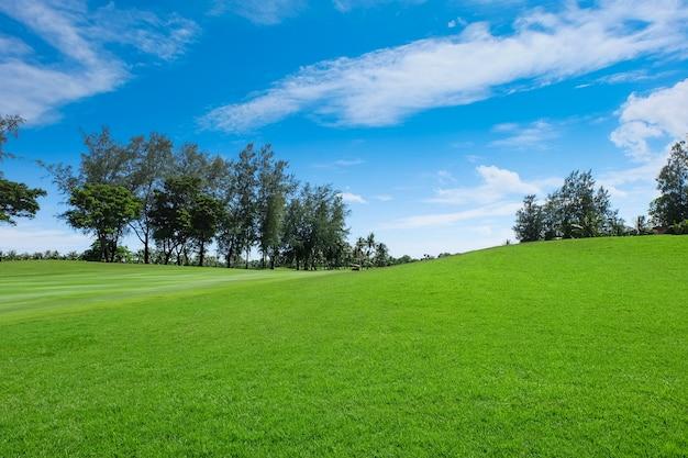 Land scape de larges pelouses vertes