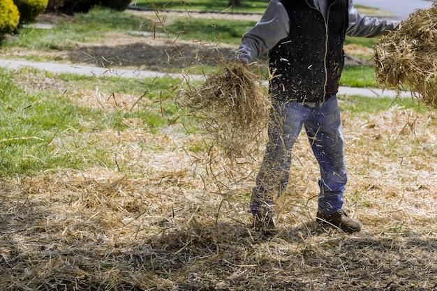 Landscapin pelouse de paillis de paille couvrant avec dans le sol travailleur paysagiste maison travaux de cour