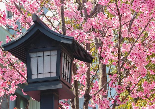 Lanterne en bois ancien japonais avec fond de sakura de fleurs de cerisier rose.